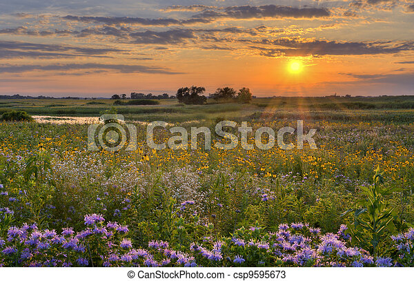 Sunshine over the flower field - csp9595673