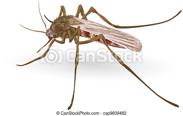 Mosquito. - csp9609482