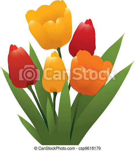 vector bunch of red, orange and yellow tulips - csp9618179