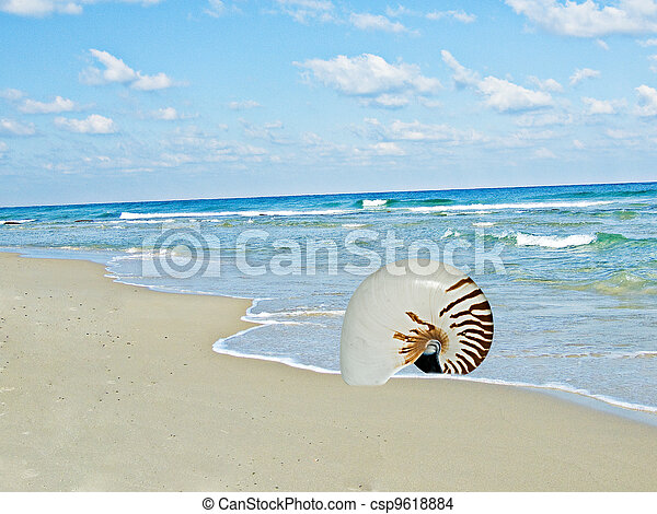nautilus shell on sea beach - csp9618884