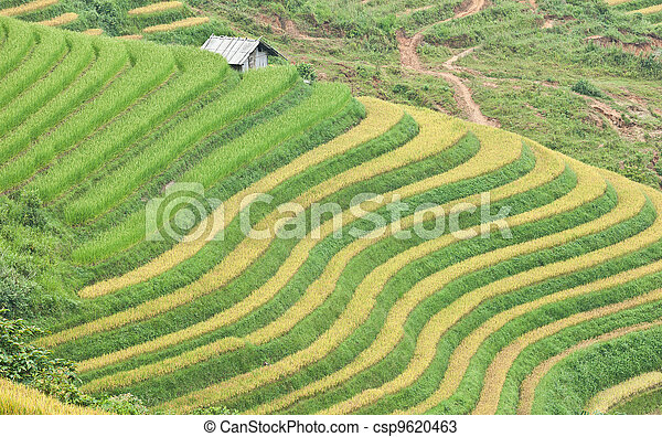 Rice terraces and cottage in the mountains - csp9620463