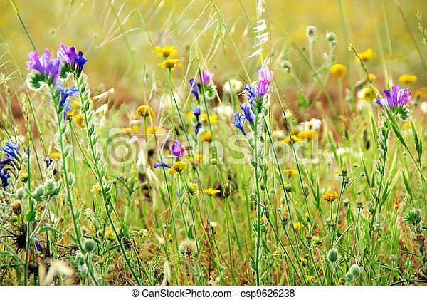 Wild flowers on portuguese field - csp9626238
