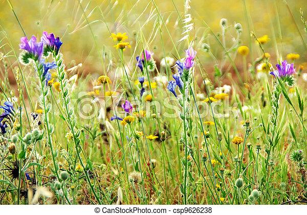 Wild flowers on portuguese field - csp9626238