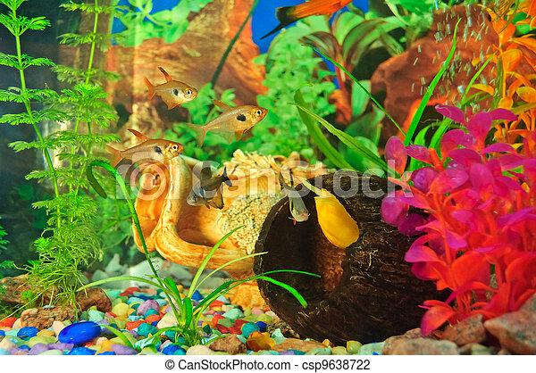 stock foto von aquarium fische von verschieden arten. Black Bedroom Furniture Sets. Home Design Ideas