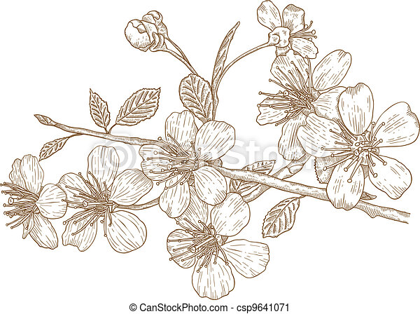 Illustration of Cherry blossoms - csp9641071