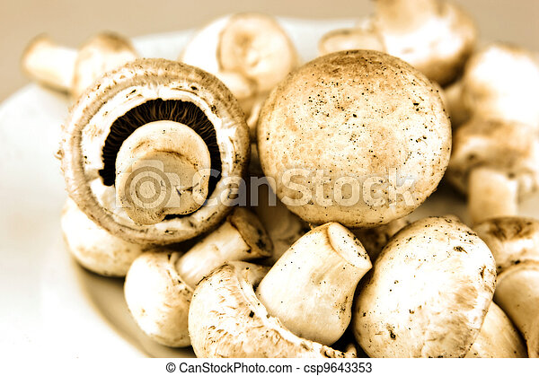 An edible mushroom, especially the much cultivated species Agaricus bisporus. - csp9643353