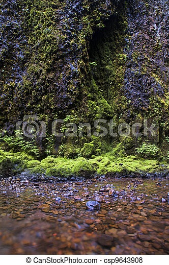 Moss, stream, rock - csp9643908