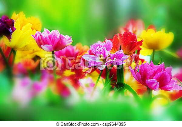 Colorful flowers in spring garden - csp9644335