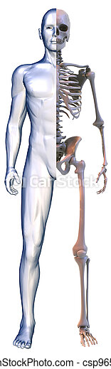body and Skeleton on white - csp9650620
