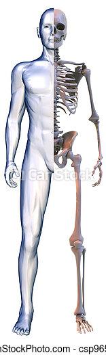 body and Skeleton on white - csp9650620