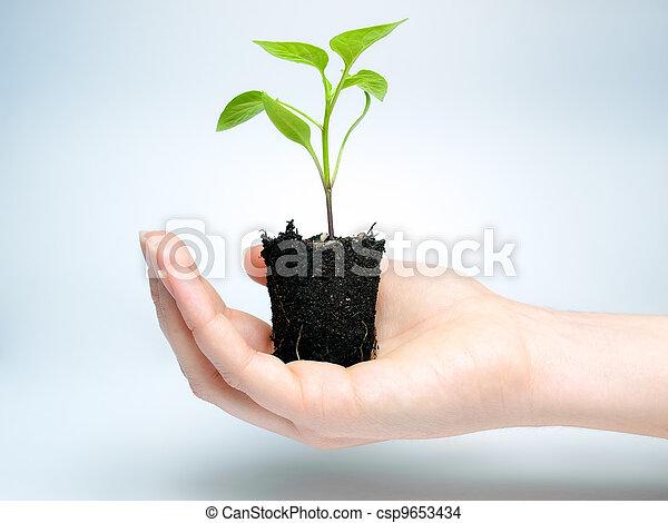 Future crop - csp9653434