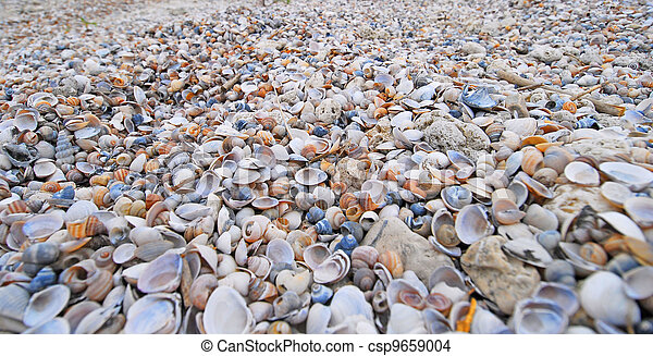 Many seashells - csp9659004