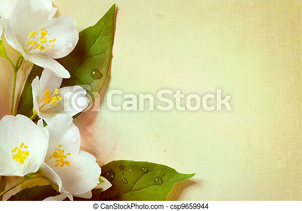 jasmine spring flowers  on old paper background - csp9659944