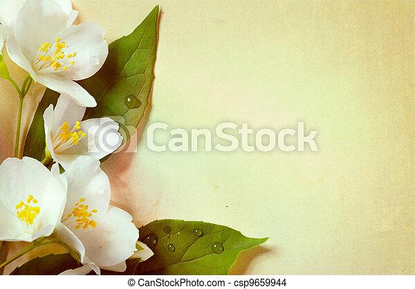 jasmine spring flowers  on old paper background - csp9659944