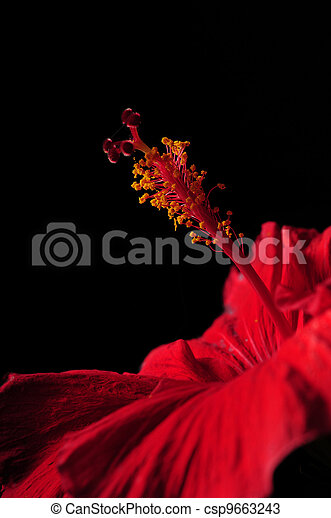 Hibiscus flower stamen - csp9663243