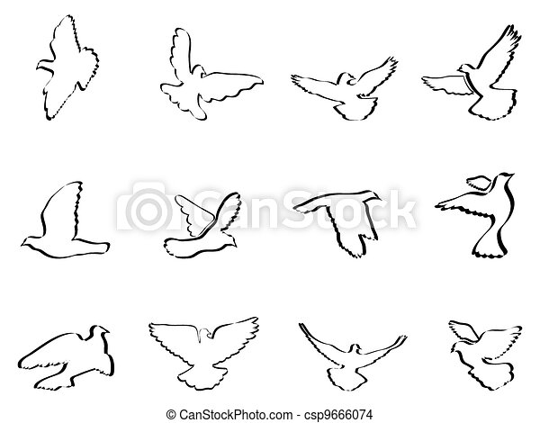 shape of pigeons and doves - csp9666074