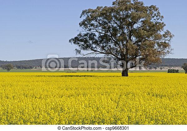農業 - csp9668301