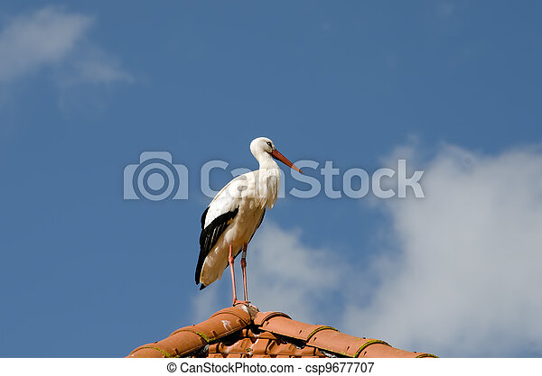 the stork on the roof - csp9677707