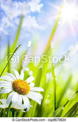 natural summer background with daisies flowers in grass - csp9679624