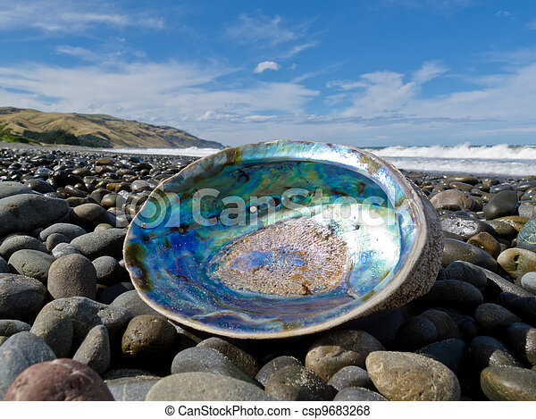 Shiny nacre of Paua shell, Abalone, washed ashore - csp9683268