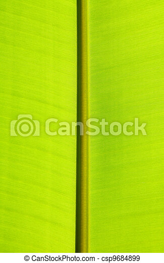 Close up of green banana leaf - csp9684899