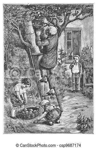 Senior with Children Picking Apples in Orchard - csp9687174