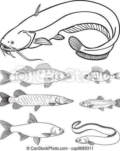 Predatory freshwater fish - csp9689311