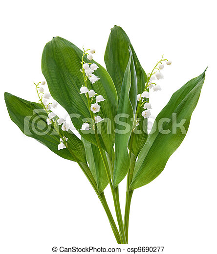 flowers. lilies of the valley isolated over white - csp9690277