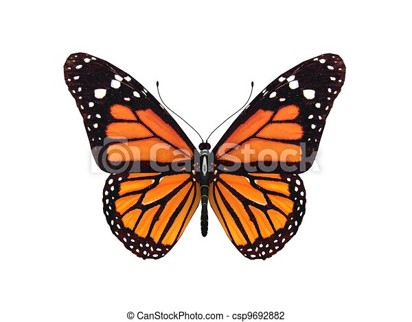 digital render of a monarch butterfly - csp9692882