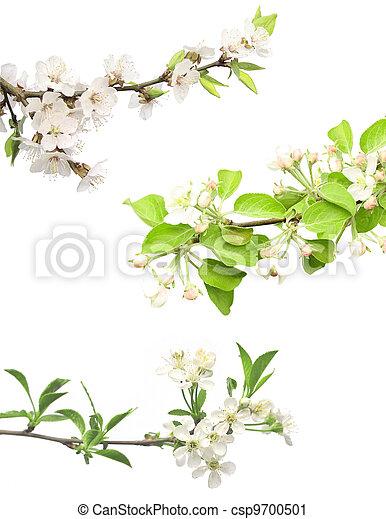Set of flowering plant - csp9700501