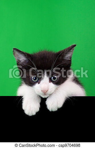 Small Domestic Cat Cutout - csp9704698