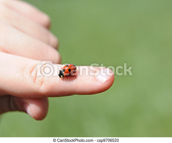 A close-up view of a child's hands hold a bright red ladybug - csp9706533