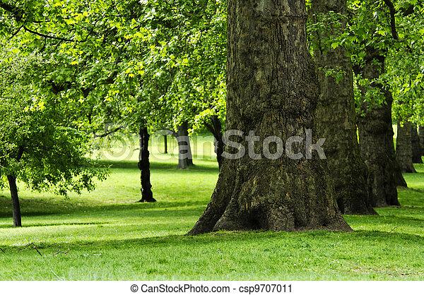 Park in spring - csp9707011