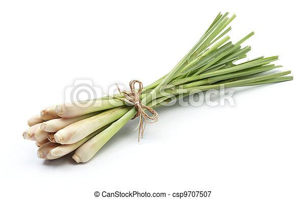 lemon grass - csp9707507
