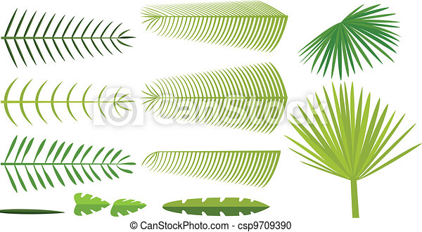 Set of palm leaves - csp9709390