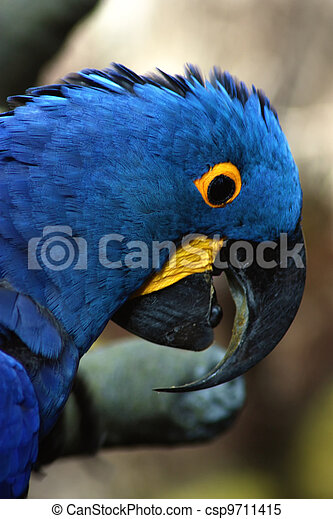 Surprised Macaw