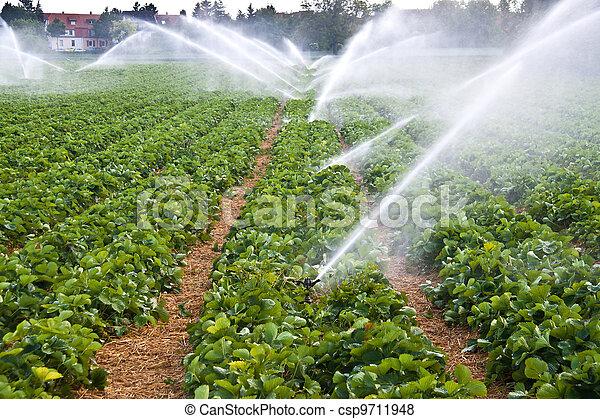 水, 水霧, 農業 - csp9711948
