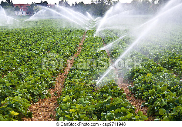 agua, rociar, Agricultura - csp9711948