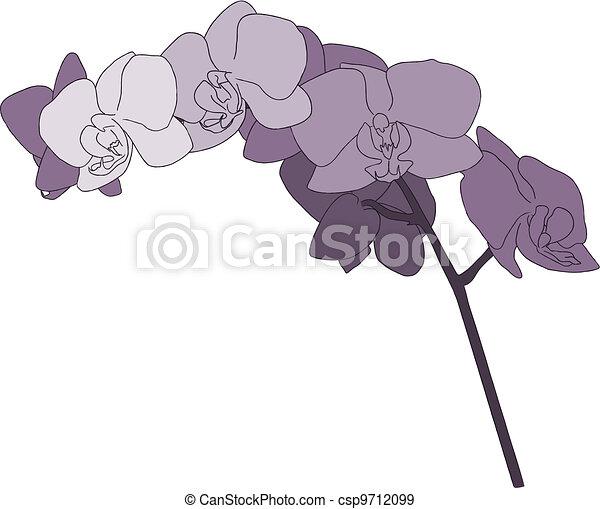 Purple Orchid Stem Illustration - csp9712099