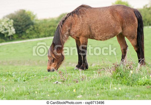 Portrait of farm horse animal in rural farming landscape - csp9713496