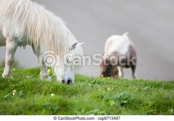 Portrait of farm horse animal in rural farming landscape - csp9713497