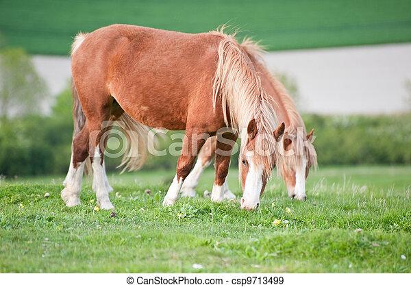 Portrait of farm horse animal in rural farming landscape - csp9713499