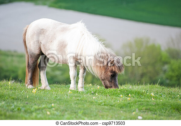 Portrait of farm horse animal in rural farming landscape - csp9713503