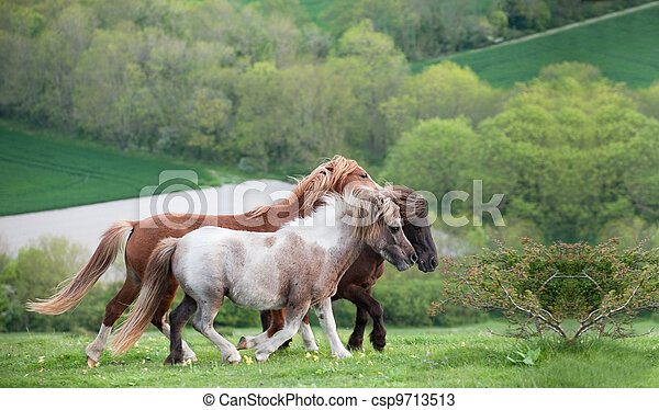 Portrait of farm horse animal in rural farming landscape - csp9713513