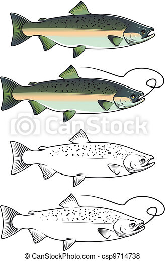 Chum salmon fish - csp9714738