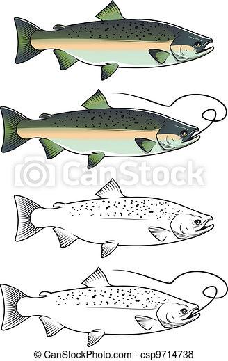 Chum salmon fish - csp9714738