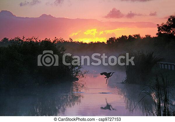 Sunrise in the Everglades - csp9727153