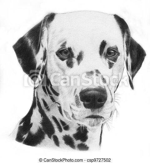Dalmatian, illustration - csp9727502