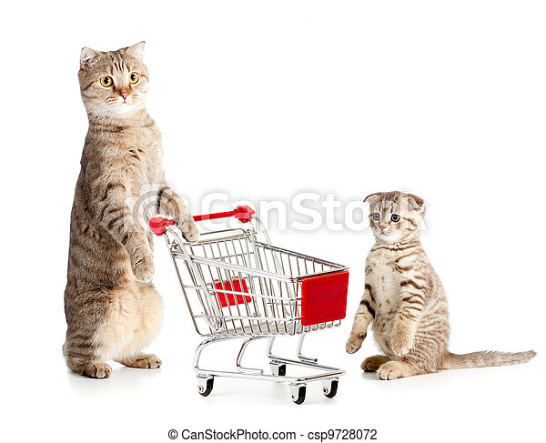 mother cat with shopping cart and kitten - csp9728072