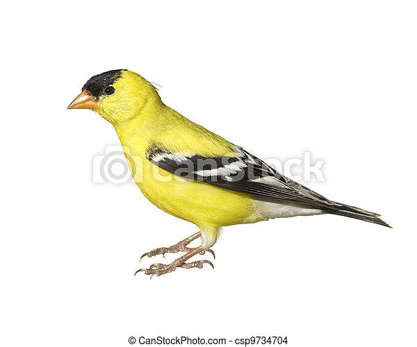 Ontario birds - csp9734704